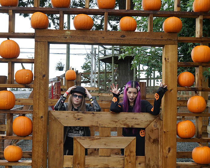 lower mainland vancouver outskirts pumpkin patches