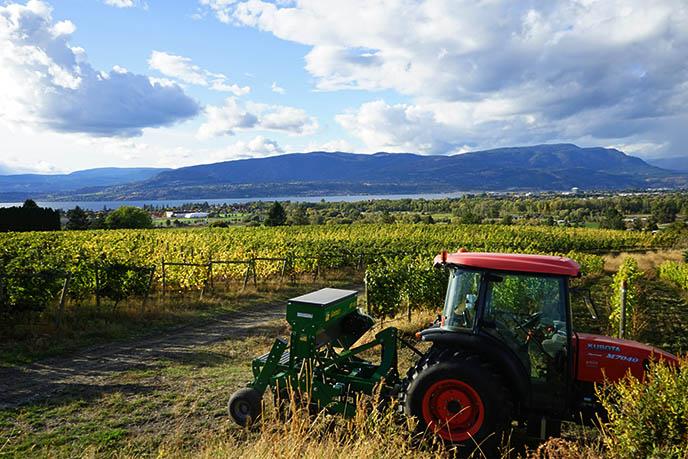 bc oldest vineyard british columbia tantalus field