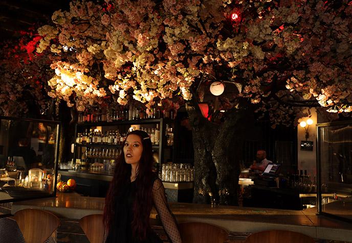 cloak and petal cherry blossom tree sakura inside restaurant