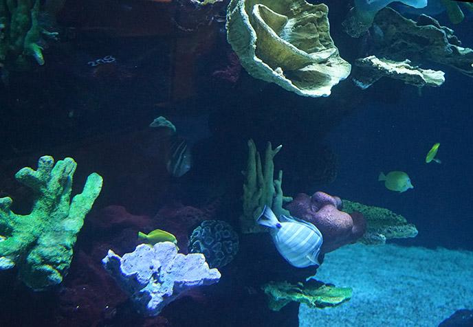 honolulu alohilani aquarium fish tank