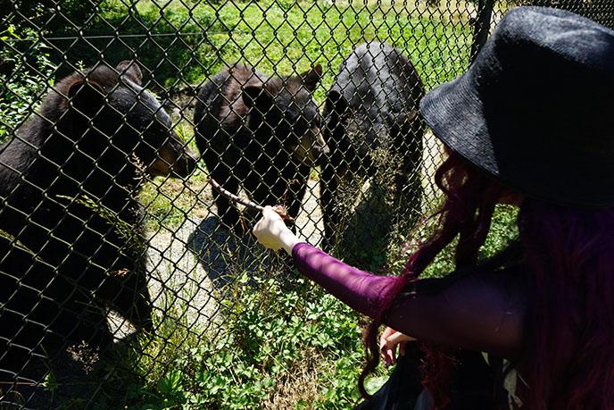 feed black bears honey on stick