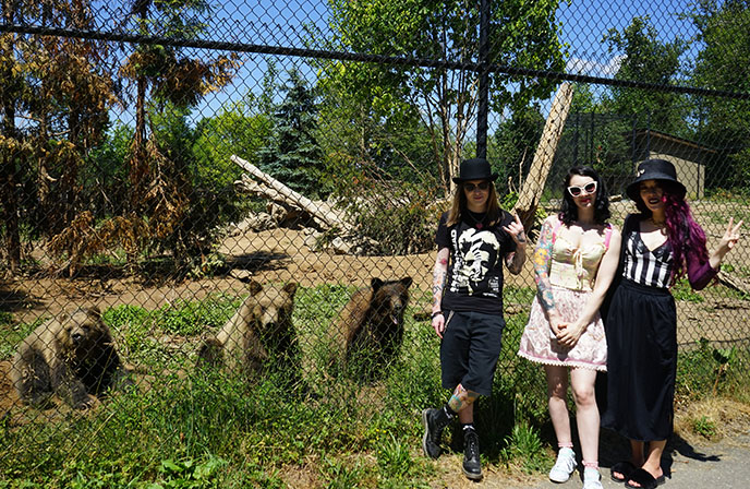 brown bears in zoo ethics vancouver zoo