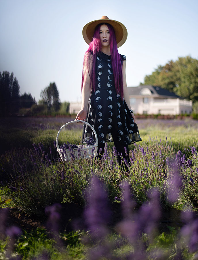 lavenderland richmond british columbia lavender flowers garden