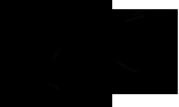 Illustration of Scottish Fold cat